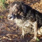 This is one mucky dog!