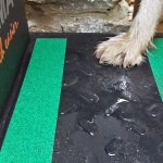 Steps for dogs - non-slip